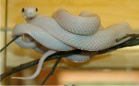Reptilien02